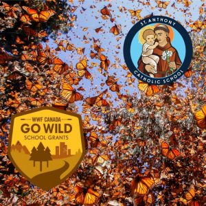 St Anthony wins WWF Go Wild School Grant for 2021!